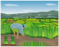 Het de vormwerk van het landbouwersbeeldverhaal op padiegebied stock illustratie