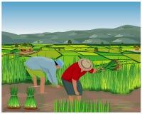 Het de vormwerk van het landbouwersbeeldverhaal op padiegebied vector illustratie