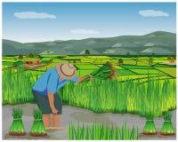 Het de vormwerk van het landbouwersbeeldverhaal op padiegebied royalty-vrije illustratie