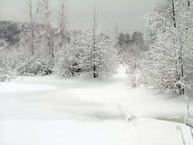In het de winterbos Stock Fotografie