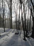 In het de winterbos Stock Foto