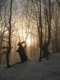 In het de winterbos Stock Foto's