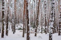 In het de winterbos, breekt de strengheid van de sneeuw de bomen stock afbeeldingen