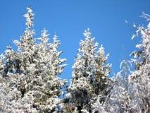 In het de winterbos zijn de takken van de bomen behandeld met sneeuw, tegen de blauwe hemel stock foto