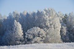 Het de winterhout. Stock Afbeelding