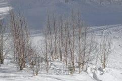 Het de winterlandschap is behandeld allen met sneeuw en ijs, de koude Royalty-vrije Stock Foto