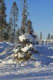 Het de winterlandschap is behandeld allen met sneeuw en ijs, de koude Royalty-vrije Stock Foto's