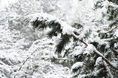 Het de winterlandschap met een pijnboombos met sneeuw tijdens een sneeuwval met snow-covered boom wordt behandeld die vertakt zic royalty-vrije stock foto