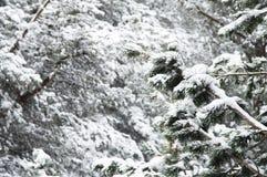 Het de winterlandschap met een pijnboombos met sneeuw tijdens een sneeuwval met snow-covered boom wordt behandeld die vertakt zic stock afbeeldingen