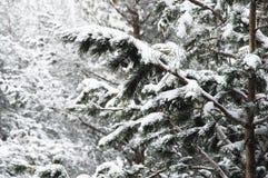 Het de winterlandschap met een pijnboombos met sneeuw tijdens een sneeuwval met snow-covered boom wordt behandeld die vertakt zic royalty-vrije stock afbeeldingen
