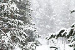 Het de winterlandschap met een pijnboombos met sneeuw tijdens een sneeuwval met snow-covered boom wordt behandeld die vertakt zic stock afbeelding