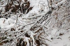 Het de winterlandschap neigde bomen met sneeuw worden behandeld die royalty-vrije stock afbeelding