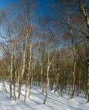 Het de winterlandschap in Rotes legt vast Royalty-vrije Stock Afbeelding