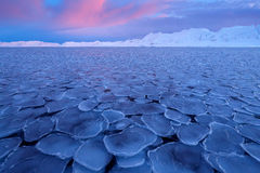 Het de winternoordpoolgebied Witte sneeuw de winterberg, blauw gletsjerijs met overzees in voorgrond, Svalbard, Noorwegen Ijs in  royalty-vrije stock foto's
