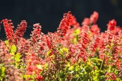 Het de zomerlandschap met rode bloemen stock afbeeldingen