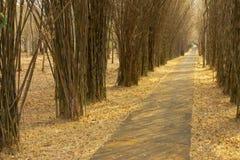 Het deel in bamboebos. Stock Foto's