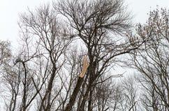 het deel dat, een gebroken houten boom zonder treetop onder andere treetops in bos mist stock afbeeldingen
