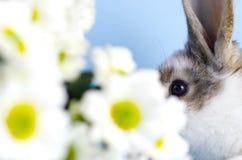 Het deel van het gezicht van het kleine konijn naast de madeliefjes stock foto