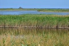 Het deltalandschap van Donau royalty-vrije stock afbeelding