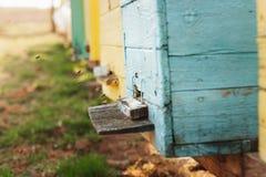Het detail dichte omhooggaand van de bijenbijenkorf De bijen werken stock foto
