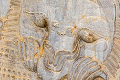 Het detail Persepolis van de leeuwhulp Stock Fotografie