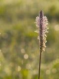 Het detail van de bloem Stock Afbeeldingen