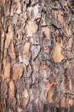 Het Detail van de boomhuid Stock Foto's