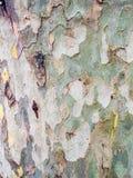 Het detail van de boomschors Stock Fotografie
