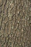 Het detail van de boomstam Stock Afbeelding