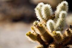 Het detail van de cactus stock foto