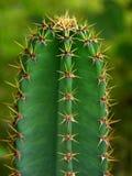 Het detail van de cactus stock fotografie