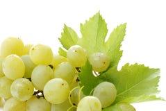 Het detail van de druif Stock Foto