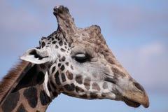 Het detail van de giraf stock foto