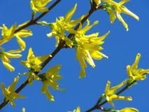 Het detail van de lente Royalty-vrije Stock Afbeeldingen
