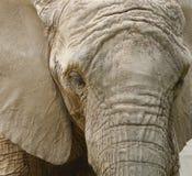 Het detail van de olifant stock foto