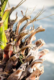 Het Detail van de palmboomstam Stock Foto's