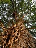Het detail van de schors op regenwoudboom stock foto's
