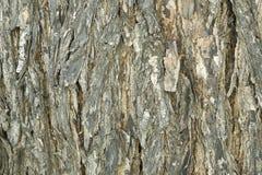 Het Detail van de Schors van de boom Stock Afbeeldingen