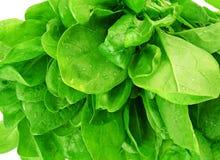 Het detail van de spinazie van bladeren Royalty-vrije Stock Foto's
