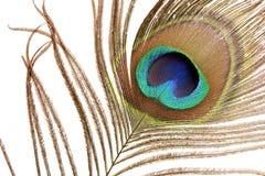 Het Detail van de Veer van de pauw Stock Afbeeldingen