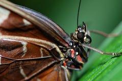 Het detail van de vlinder stock foto