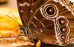 Het detail van de vlinder Stock Foto's