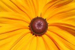 Het detail van de zonnebloem Royalty-vrije Stock Fotografie