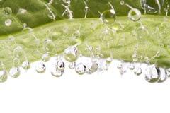 Het detail van druppeltjes op blad Royalty-vrije Stock Fotografie
