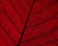 Het Detail van het Blad van de herfst stock fotografie
