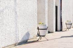 Het detail van het gebouw met potten van bloemen Stock Foto's