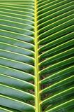 Het detail van het het bladpatroon van de kokosnoot Royalty-vrije Stock Afbeeldingen