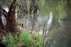 Het detail van het moerasland stock fotografie