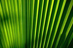 Het detail van het palmblad stock afbeelding