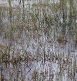 Het Detail van het moerasgras royalty-vrije stock afbeelding